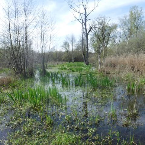 Marais des Trous de Leu
